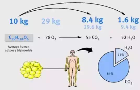 健康科学的减肥方法